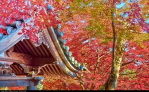 Moyan Brenn_Buddhist temple in fall_a0xmRw